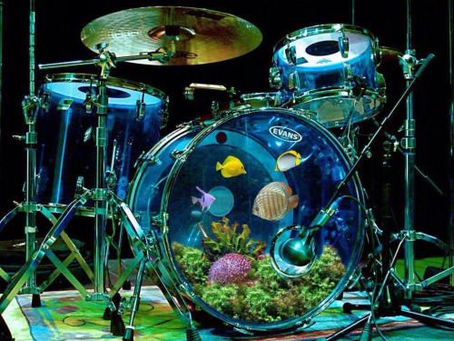 Drum Fish Tank Beatit Tv